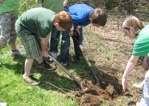 Preparing to plant a bald cypress