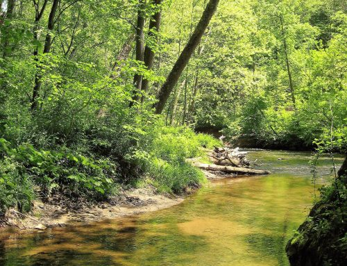 Time to close the loopholes on Md.'s forest conservation law